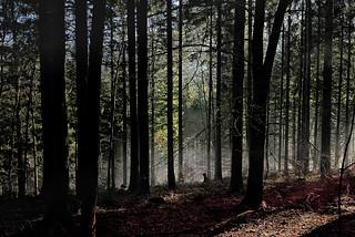 Im Nationalpark Schwarzwald