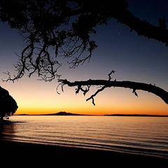 Shelley Bay, Pohutukawa Coast, New Zealand (scinta1) Tags: nofilter auckland beachlands shellybay beach sunset orange sky water island tree branch pohutukawacoast newzealand ripples