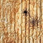 Rusted Corrugated Wall 5558 A thumbnail