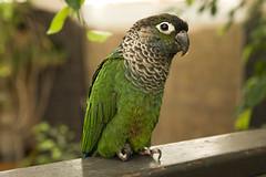 Bird Kingdom (onepassenger) Tags: ricoh pentax k3ii sigma 1750mm f28 southern ontario niagara falls vacation bird kingdom