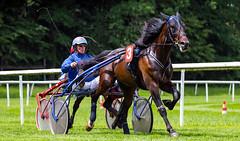 final (Guy Goetzinger) Tags: go goetzinger d850 nikon 2018 race horse trotting aarau pferderennen sport action cheval course pferde rennen sulky