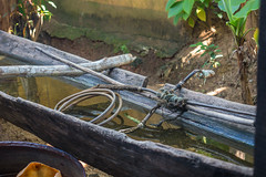 Bei den Garifuna in Orinoco, South Caribbean Coast Autonomous Region - Nicaragua (alschim) Tags: mittelamerika ninicaragua nicaragua omdem1mkii omdem1markii olympus centralamerica country equipment location middleamerica place wwwalschimcom wwwalschimde orinoco southcaribbeancoastautonomousregion exif:model=em1markii exif:lens=olympusm1240mmf28 exif:isospeed=400 exif:aperture=ƒ32 exif:make=olympuscorporation exif:focallength=35mm camera:make=olympuscorporation camera:model=em1markii garifuna