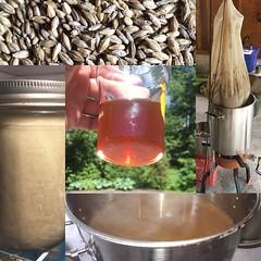 Avout brew day (found_drama) Tags: avout belgiandarkstrong dubbel belgianredstrong homebrew homebrewing tildegravitywerks essexjunction vermont vt 05452