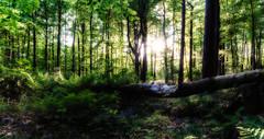 Pollok Park 1-1 (ianmiddleton1) Tags: pollokpark trees sunlight panorama treetrunk bluebells shadows