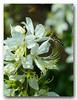 Foraging wasp (Ghost Hunter Frankfurt) Tags: flora fauna wasp
