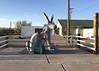 Jack Rabbit, AZ - Route 66 - 2018 (tonopah06) Tags: jackrabbit hereitis tradingpost josephcity jackrabbittradingpost arizona az 2018 route66 us66 highway 66 40interstate 40 roadsideattraction