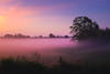 Foggy Sunrise (ildikoannable) Tags: fog foggy sunrise guelph fujix100t morning landscape dreamy