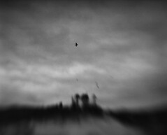To be free of the cage (Zeb Andrews) Tags: pentax67 kodakportra400uc capekiwanda oregoncoast oregon landscape lensbaby bird inflight pacificnorthwest blackwhite monochrome film mediumformat