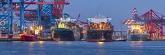 Containerhafen Waltershof - 05061801 (Klaus Kehrls) Tags: hamburg hamburgerhafen containerhafen blauestunde schiffe kräne panorama
