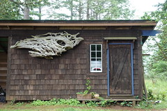 Rootwad Driftwood (Heath & the B.L.T. boys) Tags: driftwood shed cabin studio brown