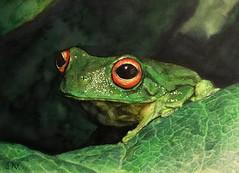 Otra rana - ink and watercolor on paper (Susana Nahmias) Tags: watercolor art nahmias frog ink fineart realism artonpaper