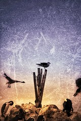 Birds (Jill Rowland) Tags: patagoniabirdsseashore abstract abstractart manipulatedphoto