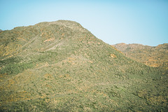 You Were My Biggest Love So Far (Thomas Hawk) Tags: america arizona phoenix saguaro usa unitedstates unitedstatesofamerica cactus fav10