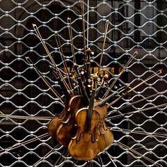 Lyon - Violons en vitrine. (Gilles Daligand) Tags: lyon rhone vitrine luthier violons bouquet