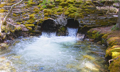 Wall of moss and water (Yuth-in-Asia) Tags: moss water stream rock wall stone trees flow pipe culvert