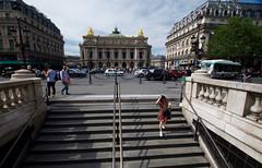 DSC_0797 (Juan Valentin, Images) Tags: palaisgarnier parisopera opera music musica musique palais palacio juanvalentin paris france