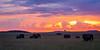 Elephants at the wonderful Masai Mara (Markus Jaschke) Tags: afrika kenia mara masai