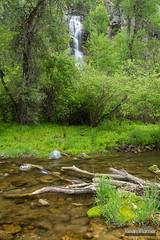 Spearfish Creek (kevin-palmer) Tags: bridalveilfalls waterfall flowing water creek stream spearfish spearfishcanyon blackhills southdakota may spring nikond750 tamron2470mmf28 green trees circularpolarizer