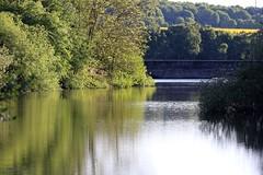 J78A1214 (M0JRA) Tags: birds flight flying wildlife rats walks gardens parks fields trees lakes ponds ducks swans rspb