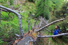 Incertezze (Roveclimb) Tags: montagna mountain alps alpi muncech escursionismo hiking trekking casenda paiedo berlinghera zania forcelladellazania valmilano altolario valchiavenna sorico forest foresta wood bosco nature natura