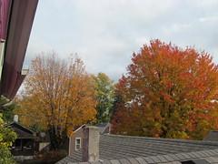 11-05-17 Dayton 68 leaves, fall color (Chicagoan in Ohio) Tags: dayton clouds sun sunhalo leaves fallcolor