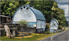 Big Blue Barn, Mini Blue Barn (NoJuan) Tags: 425mm panasonic425mm lumix olympuspenf penf microfourthirds micro43 m43 mirrorless kingcountywa carnationwa snoqualmievalleyroad barn oldbarn bluebarn blue roadside roadtrip
