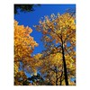 Autumn Yellow Foliage Tree Blue Sky Palermo Postcard (capturedimagesmaine) Tags: maine greeting cards postcards image photo