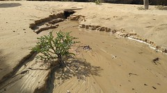 IMG_20180304_105250_085 (reinh_3008) Tags: tunisia tunesien tunesia beach impression traces human environment nature