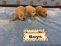 Roxie Boys 6-10