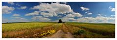 Summer landscape (bavare51) Tags: landschaft panorama sommer felder weg wolken clouds sky himmel feld