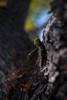 ILCE-7M2-01129-20180605-1614 // Nikon Nikkor 35mm 1:2 AI (Otattemita) Tags: 35mmf2 ailens florafauna nikkor nikon nikonnikkor35mmf2ai nipponkogaku fauna flora flower nature plant wildlife nikonnikkor35mm12ai sony sonyilce7m2 ilce7m2 35mm cnaturalbnatural ota