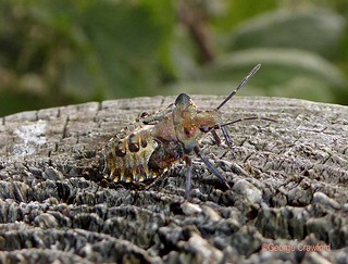 Forest Bug6