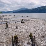 Old Trees, Loch Rannoch thumbnail