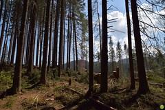 Strange tree (petrOlly) Tags: europe europa slowakei slovakia slovensko słowacja sk2018 vrbickémountainlake nature natura przyroda tree trees landscape