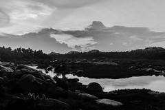 Langurs & Tungabhadra | Hampi,2017. (Vijayaraj PS) Tags: india nikond3200 asia incredibleindia outdoor animal 2017 langurs tungabhadra monkeys monkey animals river indianriver clouds monochrome riverbed
