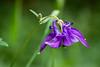 20180527_Fränkische_2851.jpg (Peter Goll thx for +7.000.000 views) Tags: 2018 wanderung fränkische fränkischeschweiz bärnfels germany macro blume flower makro nikon nikkor d850