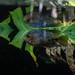 Tropical Adventures, Como Zoo 5/18/18 #comozoo #reflections #fishtank
