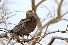 ID? (Jonas Van de Voorde) Tags: pendjari benin westafrica jonasvandevoorde safari wildlife nature animals birds