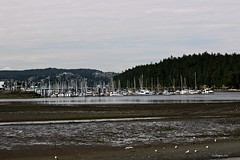 (CanMan90) Tags: nanaimo harbour marine boats sailboats mountains hills trees vancouverisland britishcolumbia cans2s canon rebelt3i efs1855mmf3556isii spring may 2018 ocean