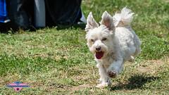 _DSC1489 (SeverX9) Tags: sony alpha 6500 70200gf4 dog run