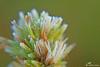 geada em close... (valeriavieira) Tags: frio geada gelo planta macro detalhes cores colors santamaria suldobrasil