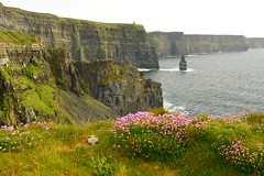 Cliffs_Of_Moher Memorial (Eyes Open To Life) Tags: cliffs cliffsofmoher coast coastline ocean wildflowers rugged rocky seascape landscape ireland greatphotographers
