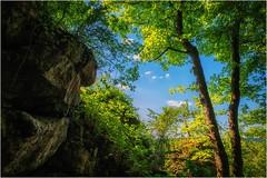 Baumgeschwister (linke64) Tags: thüringen deutschland germany natur himmel felsen bäume frühling geschwister