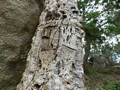 Árbol centenario en el parque de San Roque en Riveira(Coruña-España) (Los colores del Barbanza) Tags: árbol centenario parque de san roque ribeira barbanza galicia españa spain