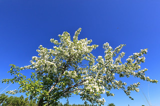 White apple in a blue sky