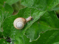 Glad there is only one Saturday a week.HSS. (dave p brecks) Tags: snails ashillcommon panasonicdmcg80 olympus60mmmacro