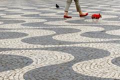 """ Dog´s Catwalk "" oder "" Vom Glück, eine Taube zu sein "" (Petra U.) Tags: lissabon lisboa lisbon mai2018 dog taube pigeon dogwear prêtàporter"