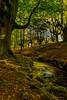 otzarreta (aingerubidaurreta) Tags: forest euskadi euskalherria europe green grass gorbea nikon nikonistas nature naturalpark paisaje paysbasque river trees landscape leaves water