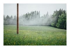 A pole in the mist (cardijo) Tags: baum haunsberg nebel wald