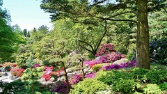 (farmspeedracer) Tags: nature forest mountain garden japanese 2018 may mai mayo bloom pink green architecture gardener
